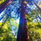 Der Baum oder mehr Glauben an sich selbst